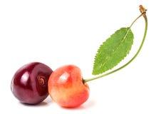 2 вишни при крупный план лист изолированный на белой предпосылке Стоковая Фотография