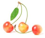 3 вишни при крупный план лист изолированный на белой предпосылке Стоковые Изображения RF