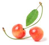 2 вишни при крупный план лист изолированный на белой предпосылке Стоковые Изображения RF