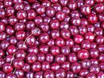 вишни прокишут Стоковая Фотография RF