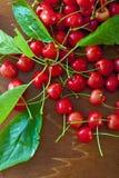 вишни прокишут Стоковое Фото