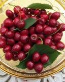 Вишни - сладостные и спелые - как раз принятые от дерева в саде Стоковая Фотография