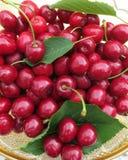 Вишни - сладостные и спелые - как раз принятые от дерева в саде Стоковое Изображение RF