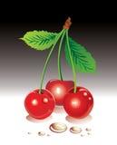 вишни сладостные иллюстрация штока