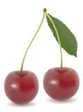 вишни сладостные Стоковая Фотография RF