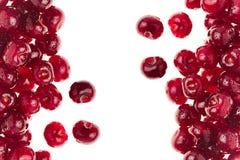 Вишни ягод зрелые свежие на белой предпосылке Стоковое фото RF