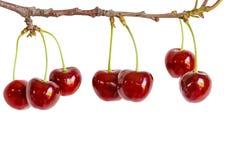 Вишни ягод на ветви на белой предпосылке Стоковая Фотография RF