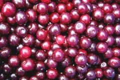 вишни Стоковое Изображение