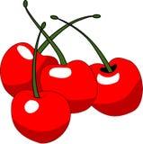 вишни Стоковое Изображение RF