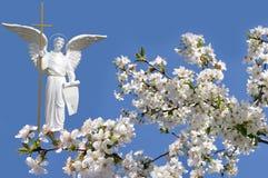Вишня белого ангела и белых цветков Стоковые Изображения RF