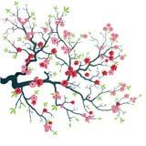 вишня ветви Иллюстрация штока