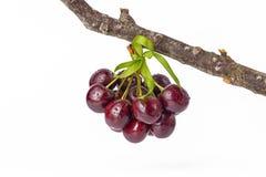 Вишня, вишни на белой предпосылке Стоковые Изображения