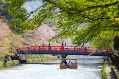 Вишня замка Hikone стоковое фото