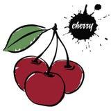 Вишня красного цвета ягод стоковые изображения