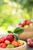 Вишня органического бразильского плодоовощ Acerola малая Стоковые Изображения RF