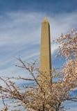 вишня отрубей цветения немногий вашингтон памятника Стоковое Изображение