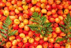 Вишня предпосылки сладостной вишни с лист Стоковое фото RF