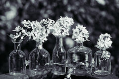 Вишня птицы цветков в вазе на предпосылке ландшафта весны предпосылка цветет весна Стоковая Фотография RF
