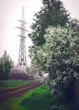 вишня 2007 птицы цветя может novosibirsk Стоковые Изображения RF