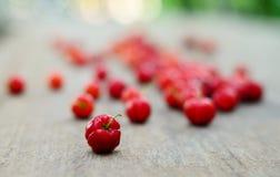 вишня свежая Стоковое Фото