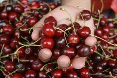 Вишня свежих вишен естественная к предпосылке на уличном рынке Стоковые Фото