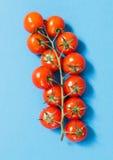 Вишня томатов Стоковое фото RF