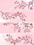 вишня цветения знамени Стоковые Фотографии RF