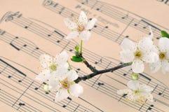 вишня цветения одичалая Стоковое Изображение RF
