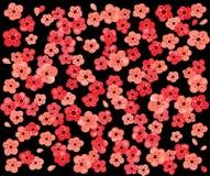 вишня цветения предпосылки Стоковое Изображение RF