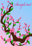 вишня цветения предпосылки Стоковая Фотография RF