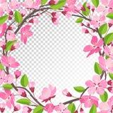 вишня цветения предпосылок предпосылки больше моего portfollio бесплатная иллюстрация