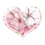 Вишня цветет конец-вверх Стоковые Фото