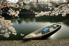 вишня шлюпки цветения Стоковые Фотографии RF