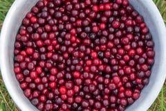 вишня ягод Стоковая Фотография
