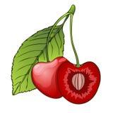 Вишня, ягода в разделе с косточкой Покрашенный график, шарж также вектор иллюстрации притяжки corel иллюстрация вектора