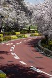 вишня япония sakura цветения Стоковые Фото