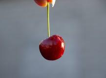вишня Стоковое Изображение RF