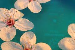 вишня Стоковые Фотографии RF