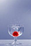 вишня 4 Стоковое Изображение RF
