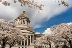 Вишня Blos весеннего времени Олимпии здания столицы штата Вашингтона Стоковая Фотография RF