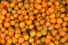 Вишня Guava Стоковое Изображение RF