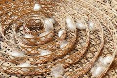 2 вида белого кокона Стоковые Изображения RF
