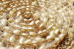 2 вида белого кокона Стоковые Фото