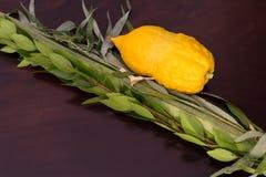 4 вида на праздник Sukkot Стоковое Изображение