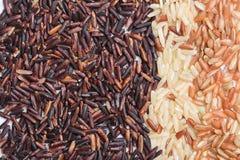 3 вида разнообразия коричневого риса Стоковая Фотография