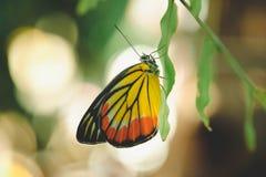 Вид бабочки на лист Стоковые Фотографии RF
