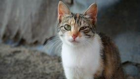 Видео- серый цвет - белый кот сидя на улице сток-видео