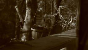 Видео черно-белых листьев Dryopteris сток-видео