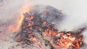 Видео Timelapse горящей большой кучи листьев и хворостин приходя назад от зол в осени в 4k 3840 пикселах, 24fps видеоматериал