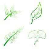 Вид 4 листьев Стоковые Изображения